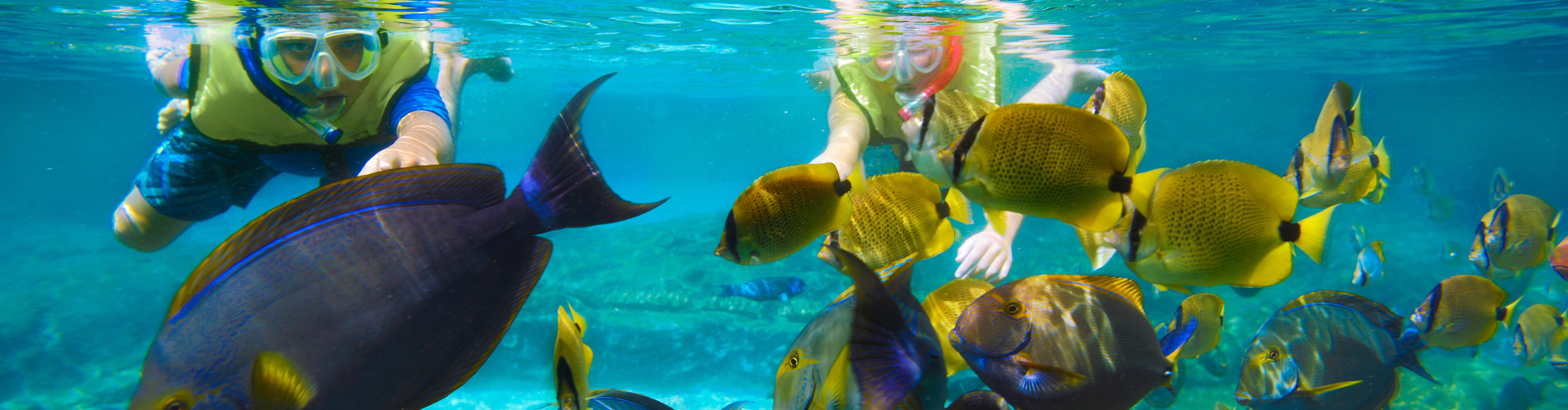 key and unforgettable vacation Looking for siesta key vacation information we have your free siesta  the  amazing natural beauty of siesta key is unforgettable the beaches are jewels,.